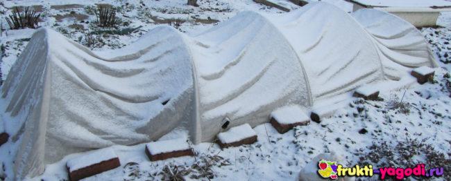 Виноград укрыт плёнкой в виде теплицы на зиму