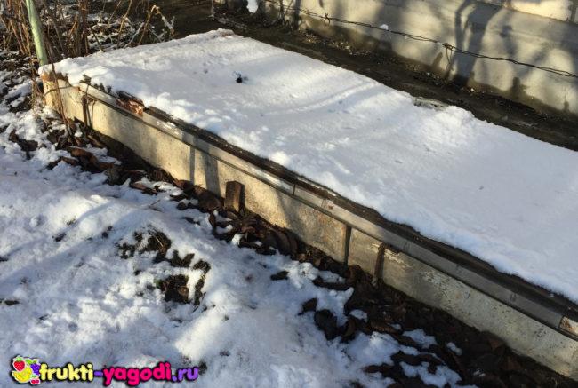 Укрытие винограда и снег в зимний период