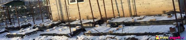 Укрытие винограда на зиму специальным материалом