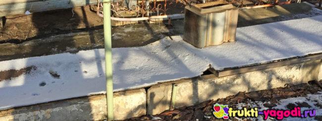 Укрытие винограда зимой припорошено немного снегом