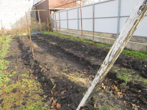 Зимнее укрытие виноградной лозы грунтом, насыпаемым на мешковину