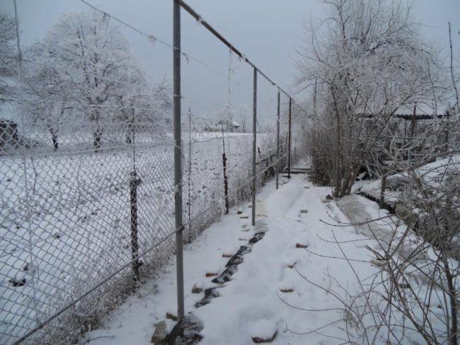 Укрытие виноградной лозы под пленку на зиму и снежный покров на земле