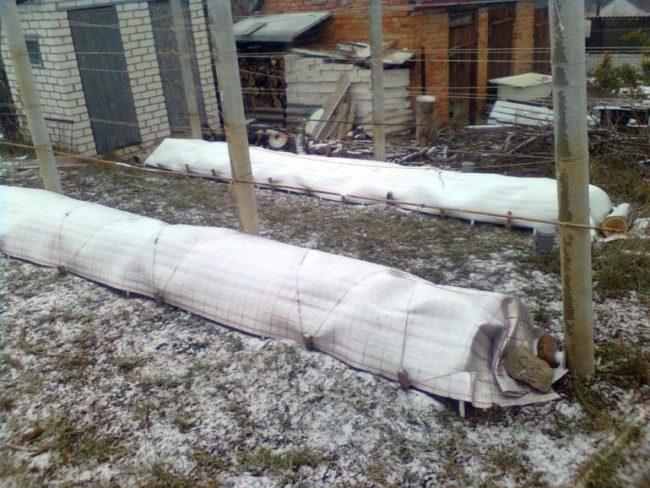 Зимнее укрытие плодового винограда под плотный нетканый материал на дугах