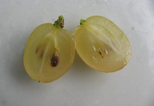 Две половинки ягоды винограда гибридного сорта Валек и семечка внутри мякоти