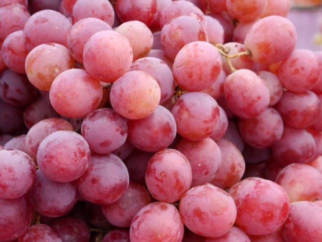 Ягоды винограда сорта Велес крупным планом