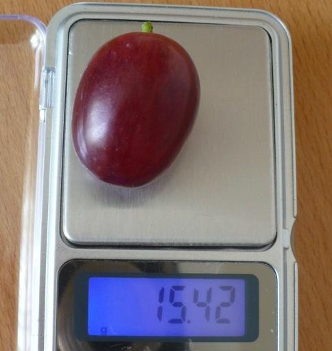 Крупный плод винограда сорта Джони массой более 15 грамм и карманные весы