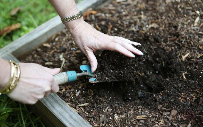 Женские руки держат лопатку, копают землю