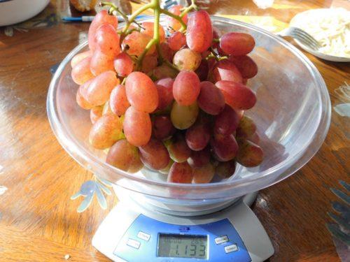 Крупная гроздь столового винограда Виктор в чаше бытовых электронных весов