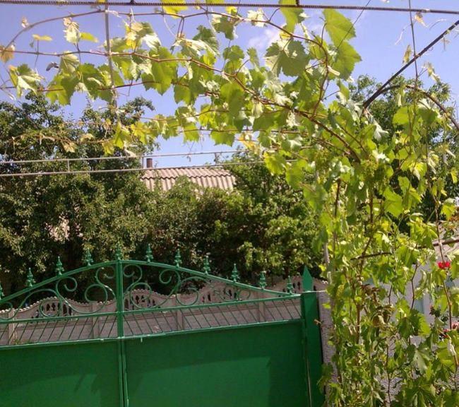 Виноградные стебли на арочной шпалере, перекрывающей пространство перед воротами
