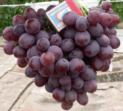 Объемная гроздь столового винограда гибридной формы Низина и спичечный коробок