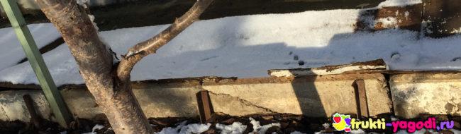Укрытый на зиму виноград под слоем небольшого снега