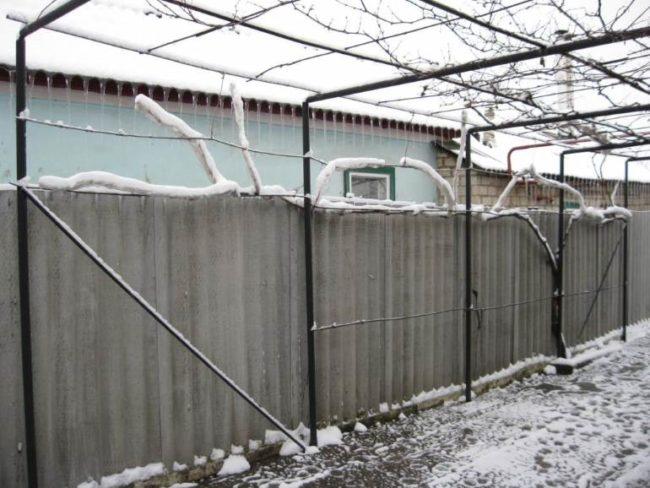 Шпалера из труб на приусадебном участке и ветки винограда под снегом