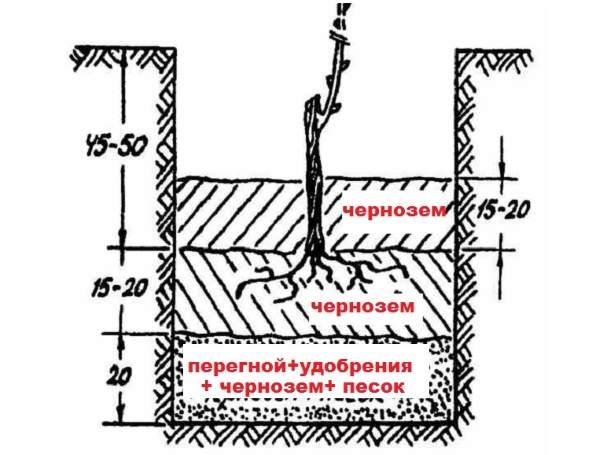 Схема устройства посадочной ямы для винограда с многослойным заполнением