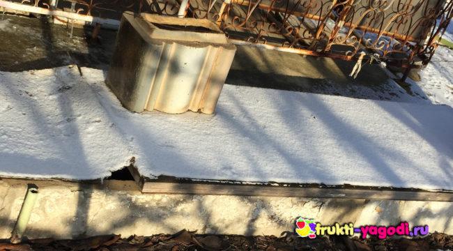 Виноград под укрытием на зиму
