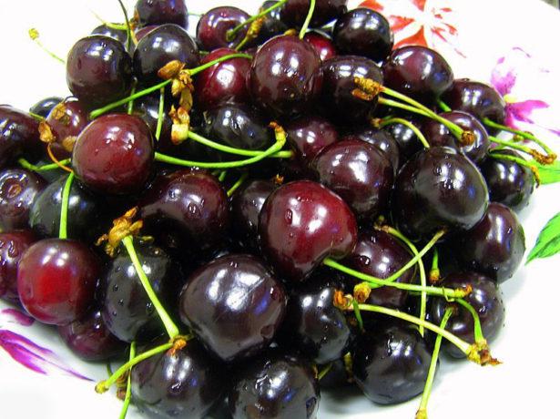 Горстка ягод скороспелой черешни сорта Ипуть отечественной селекции