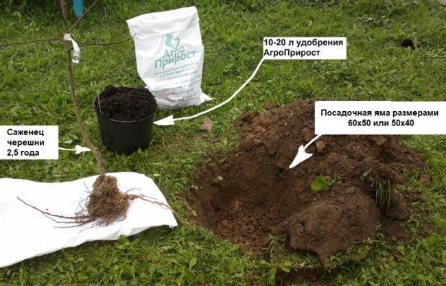 Фото весенней посадки саженца черешни с указанием размеров ямы используемого удобрения