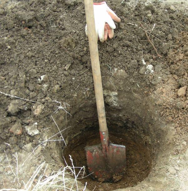 Посадочная яма для виноградного саженца глубиной около полуметра