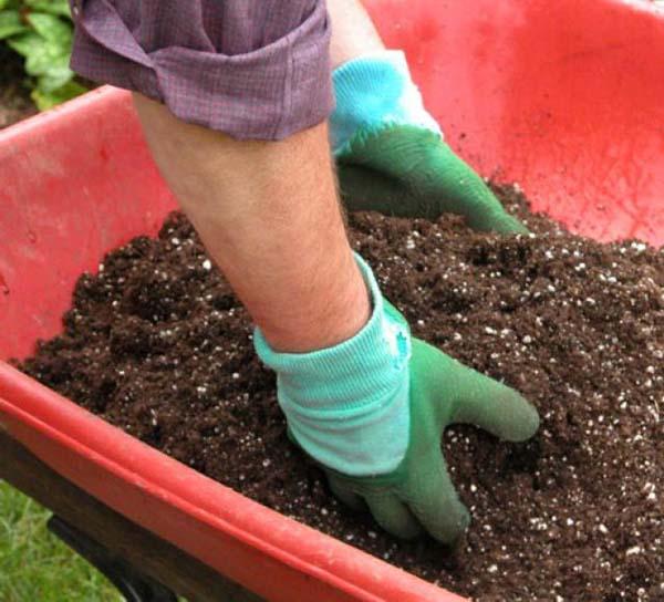 Садовод набирает питательный перегной руками в перчатках из садовой тачки