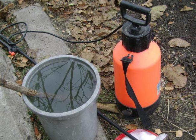 Пластиковое ведро с раствором препарата Шавит для опрыскивания плодового винограда