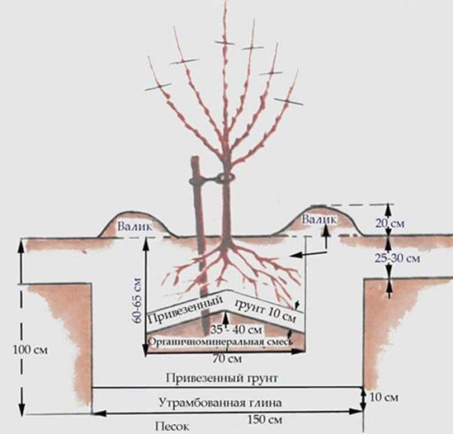 Схема устройства и размеры посадочной ямы для саженца черешни