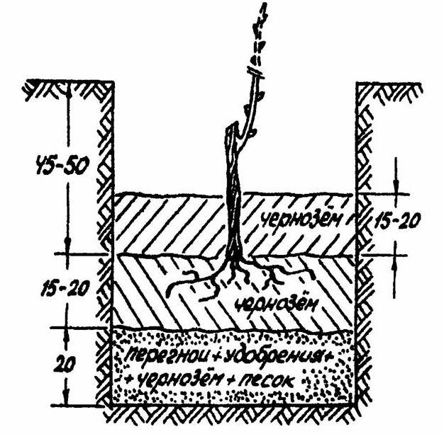 Схема посадочной ямы для винограда с многослойным заполнением