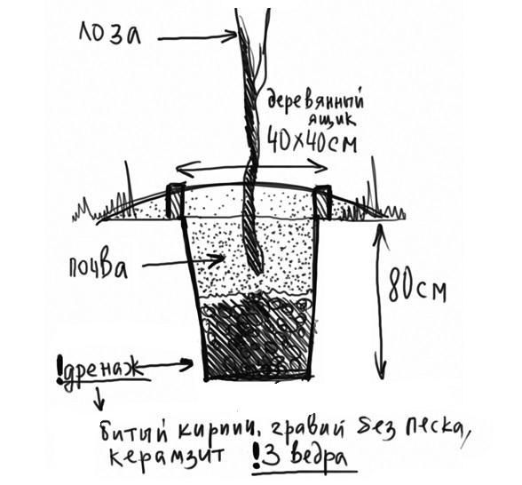 Схема стандартной посадочной ямы для саженца плодового винограда