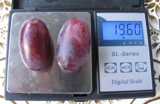 Две ягоды среднего размера гибридного винограда сорта Джованни на весах
