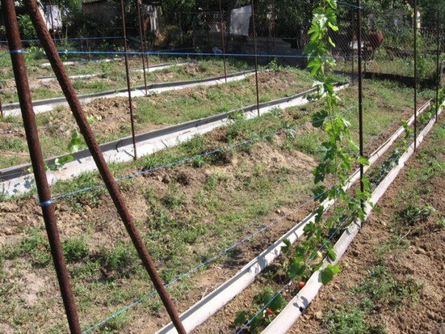 Частный виноградник в начале сезона вегетации и заглубленные траншеи с коробами
