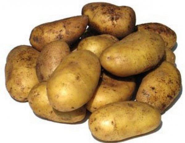 Горстка клубней картошки столового сорта Чародейка с кожурой желтоватого оттенка