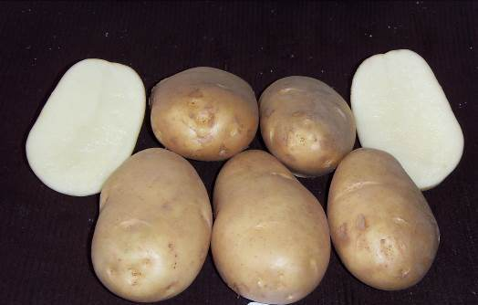Целые и разрезанные клубни картошки Чародейка с мякотью молочного окраса
