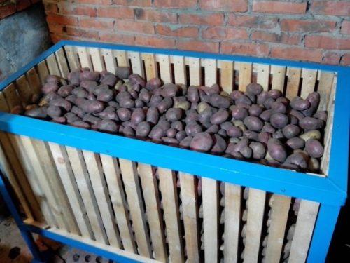 Самодельный решетчатый ящик из дерева с заложенной на хранение картошкой