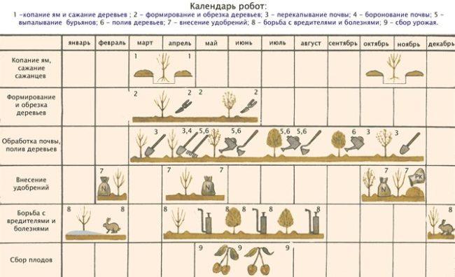 Календарь садовых работ по выращиванию черешни в Краснодарском крае