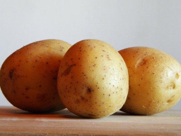 Три картофелины овальной формы гибридного сорта Чародейка ленинградской селекции