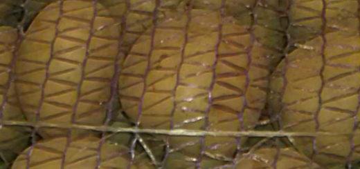 Клубни картошки Коломбо в транспортировочной сетке