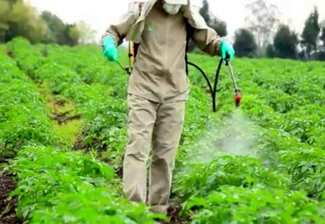 Опрыскивание посадок картофеля химическими препарата с использованием защитной одежды