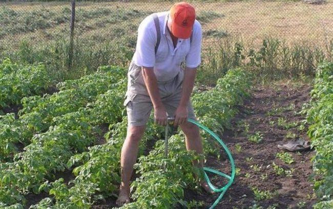 Установка садового разбрызгивателя на опору для летнего полива картошки