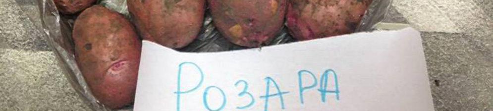 Картофель Розара спелый с этикеткой