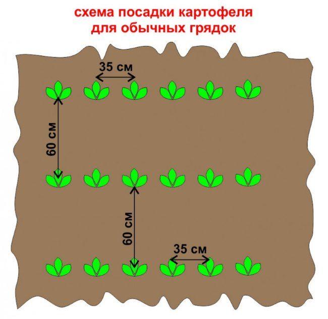Стандартная схема посадки картофеля в обычные грядки