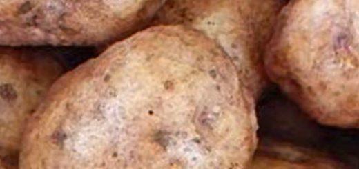 Спелые плоды картошки Синеглазка вблизи