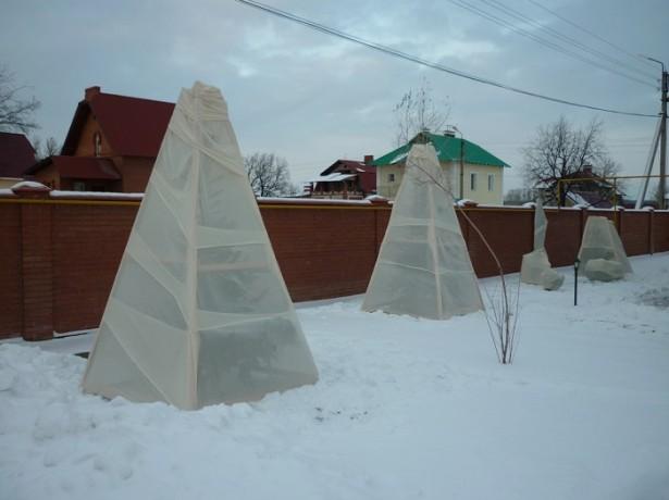 Укрытие черешни на зиму под белый нетканый материал, натянутый на деревянный каркас