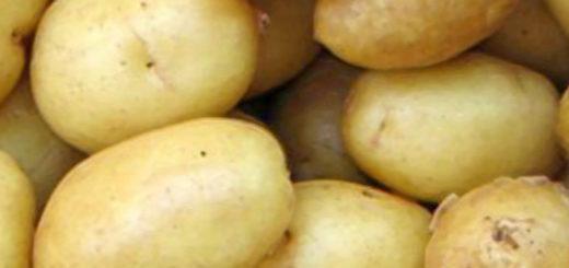 Спелые клубни картошки Адрета вблизи