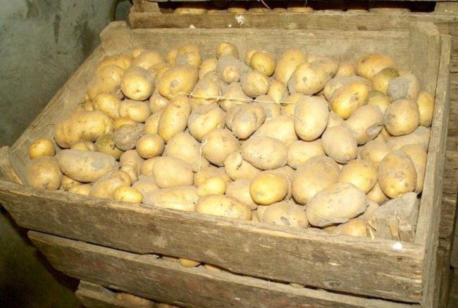 Деревянный ящик с картофелем Адрета на хранении в погребе