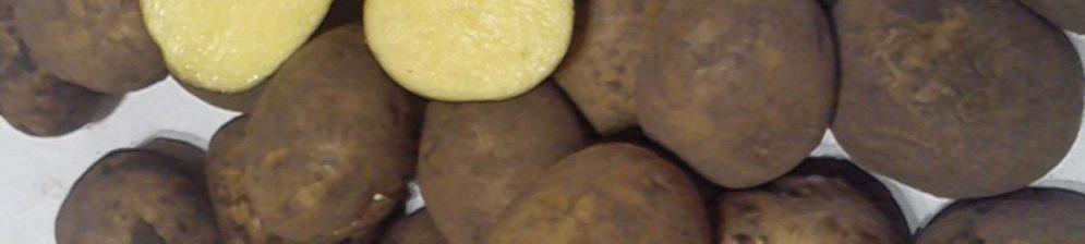 Клубни картошки сорта Импала обычные и в разрезе