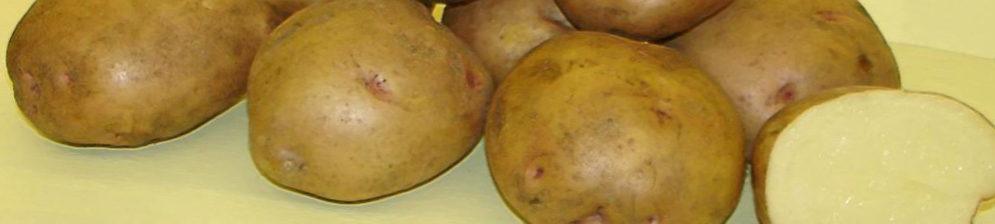 Спелые плоды картошки сорта Жуковская в разрезе и обычные