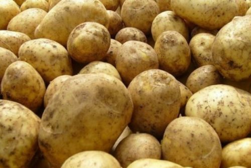 Выкопанный картофель гибридного сорта Импала раннего срока созревания