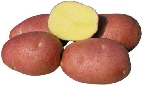 Разрез корнеплода картофеля сорта Беллароза немецкой селекции