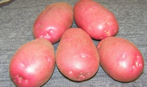 Клубни картошки Беллароза с кожурой розового окраса