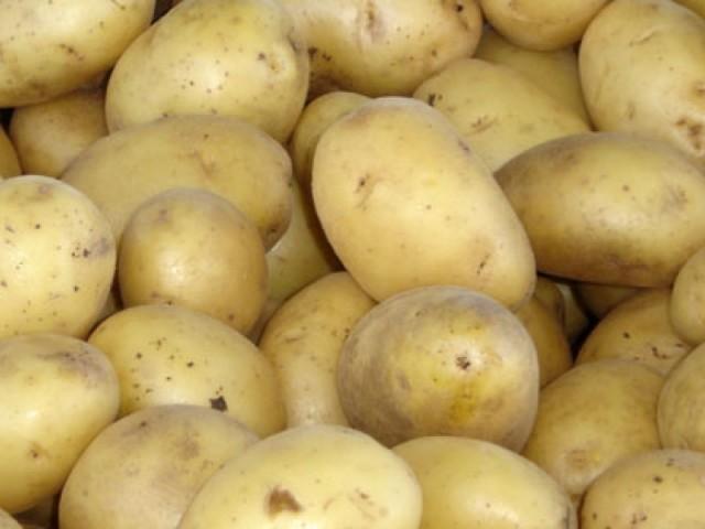 Корнеплоды картофеля гибридного сорта Удача с кожурой светло-желтого цвета