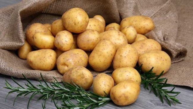 Урожай картошки сорта Невская среднераннего срока созревания