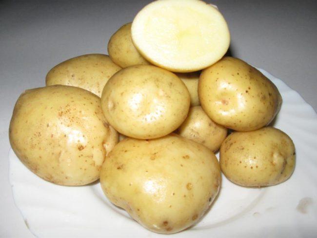 Мытые картофелины гибридного сорта Невский на белой тарелке